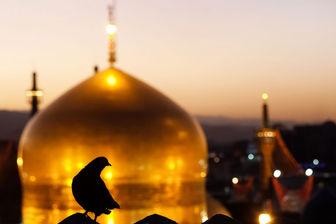 گزارشی از ابراز عشق و ارادت به امام رضا(ع) در قالب آثار موسیقی